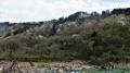 花の青葉山