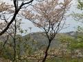 山桜や朴や