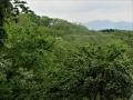 ウワミズザクラの森