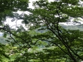 木間に見える山