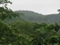 ネムノキのある山