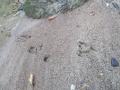 瓜坊の足跡
