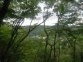 林間より放山を望む