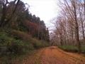 青葉山公園の道