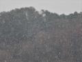 雪バサバサ