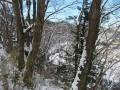 木の間の広瀬川