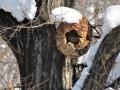 キイロスズロバチの巣