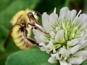 ハチ200628