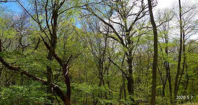 s-広葉樹の林20200507