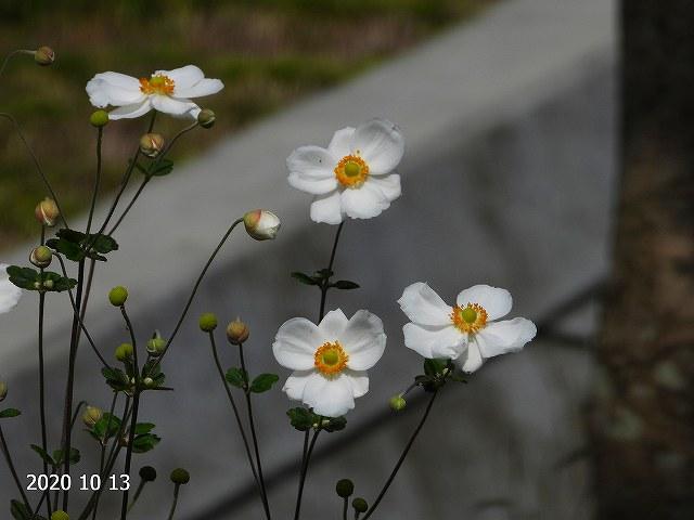 s-何かな20201013
