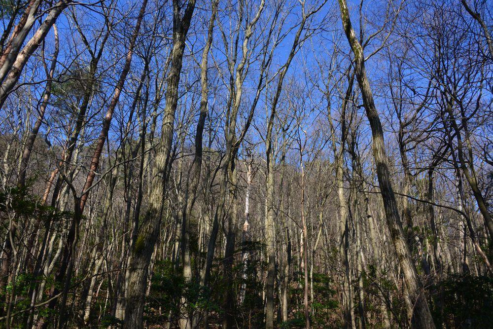林の道-5