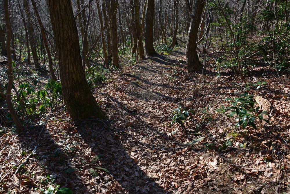 林の道-4