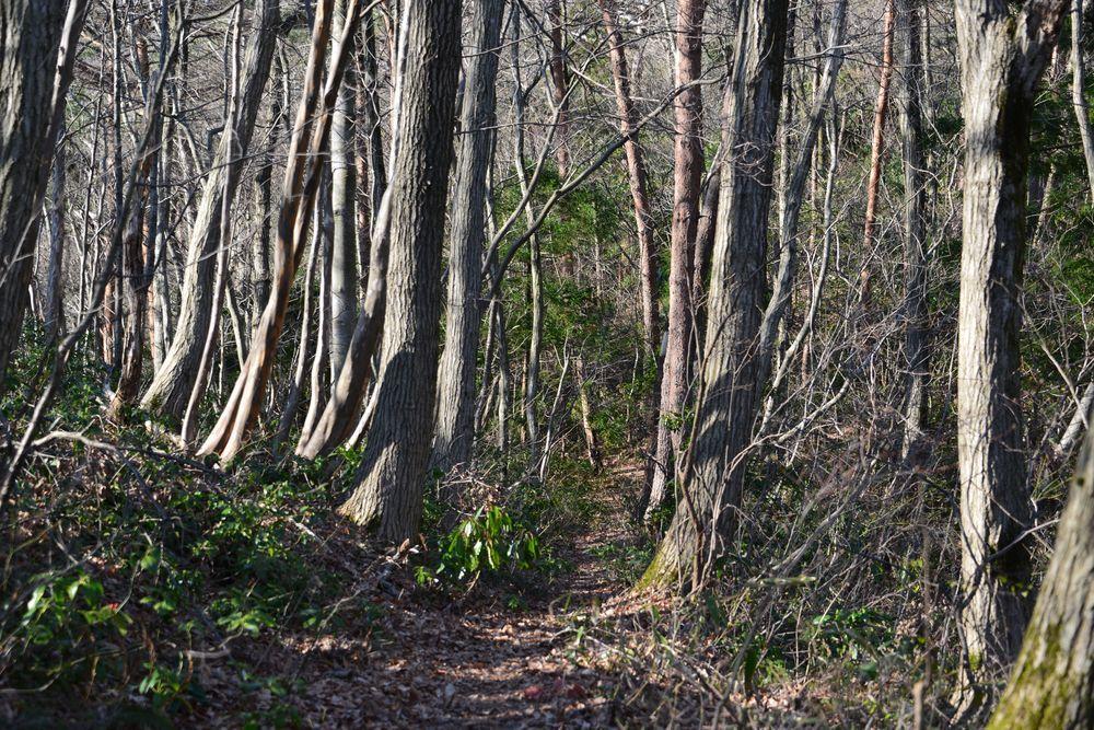 林の道-3