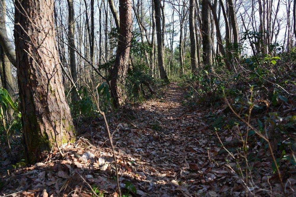 林の道-2