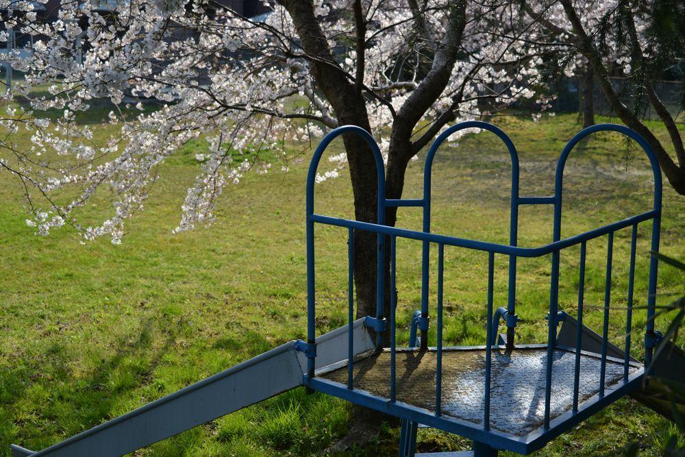 桜のある宮-6