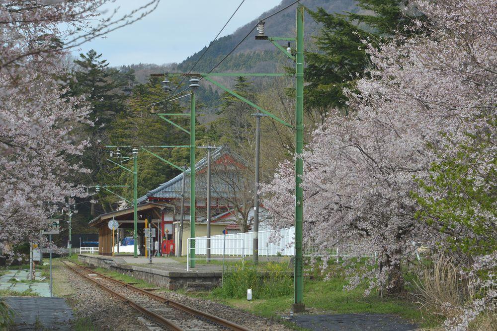 駅周辺の桜-4