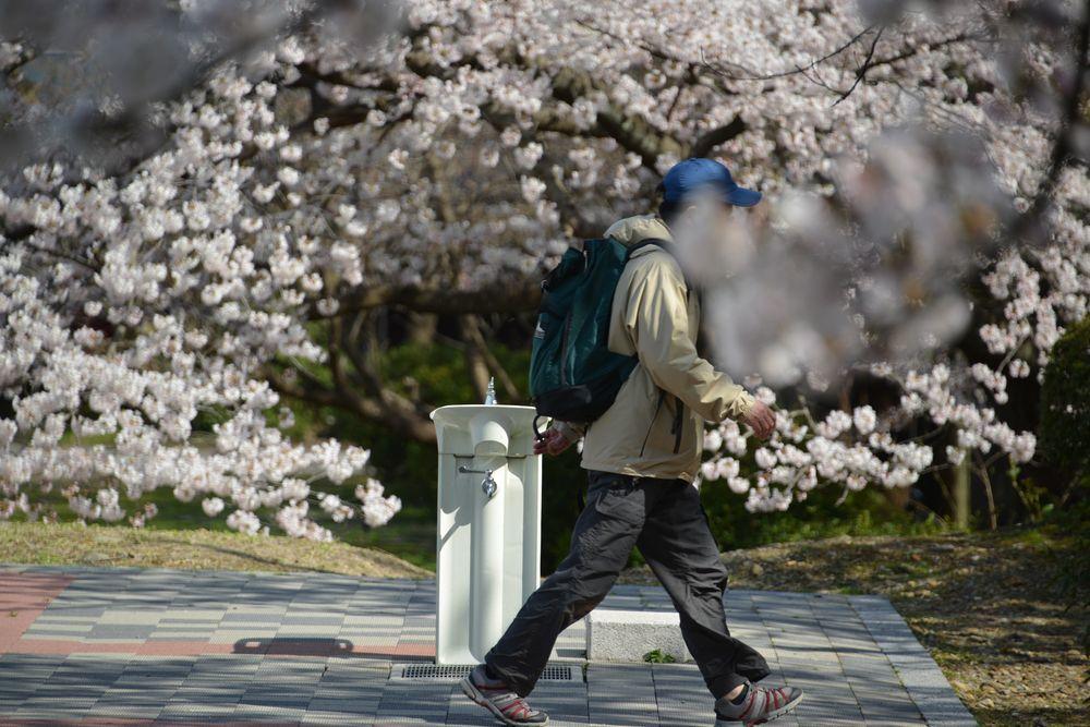 水飲み場と桜-4