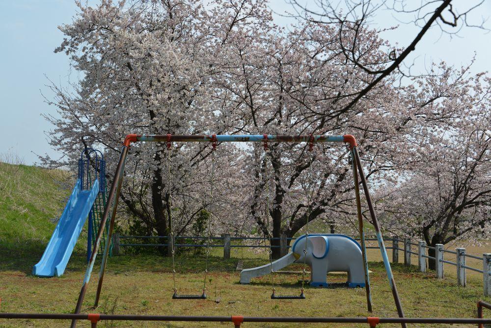 廃校の桜-5