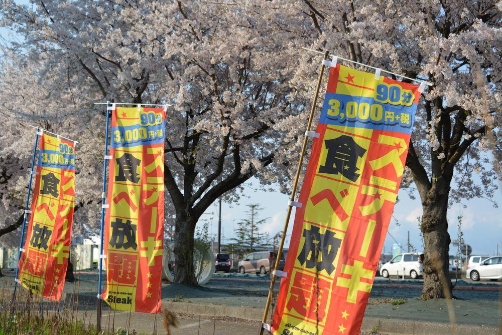 桜並木-3