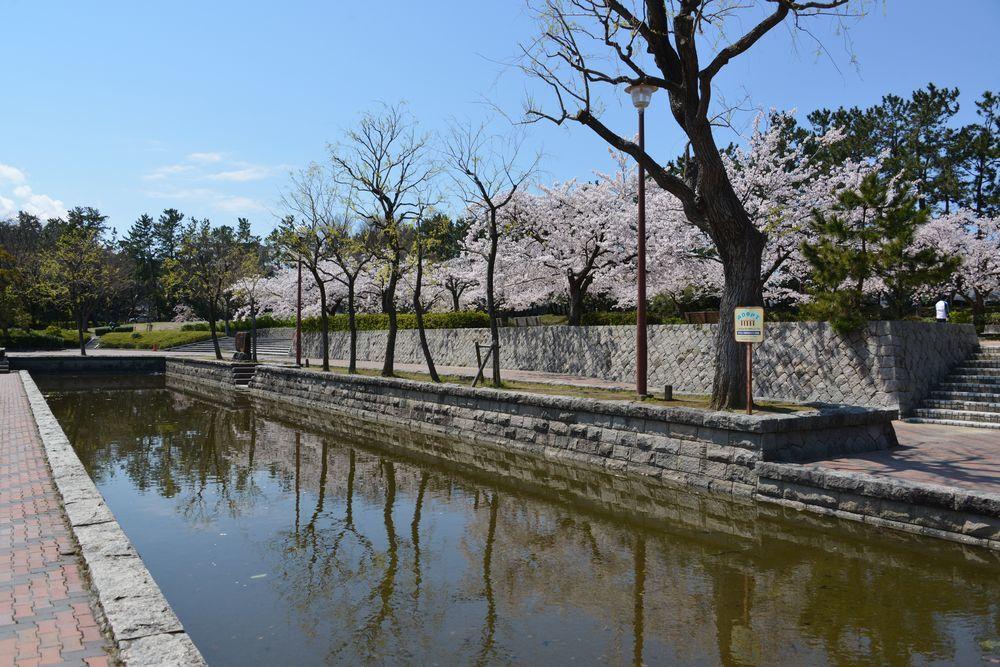 西大畑公園の桜-8
