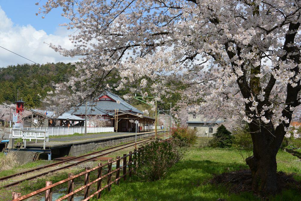 桜と駅と踏み切り-2