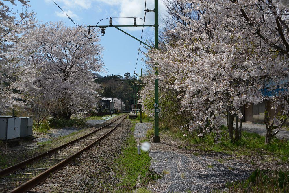 桜と駅と踏み切り-3