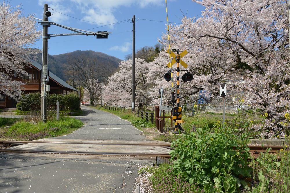 桜と駅と踏み切り-5