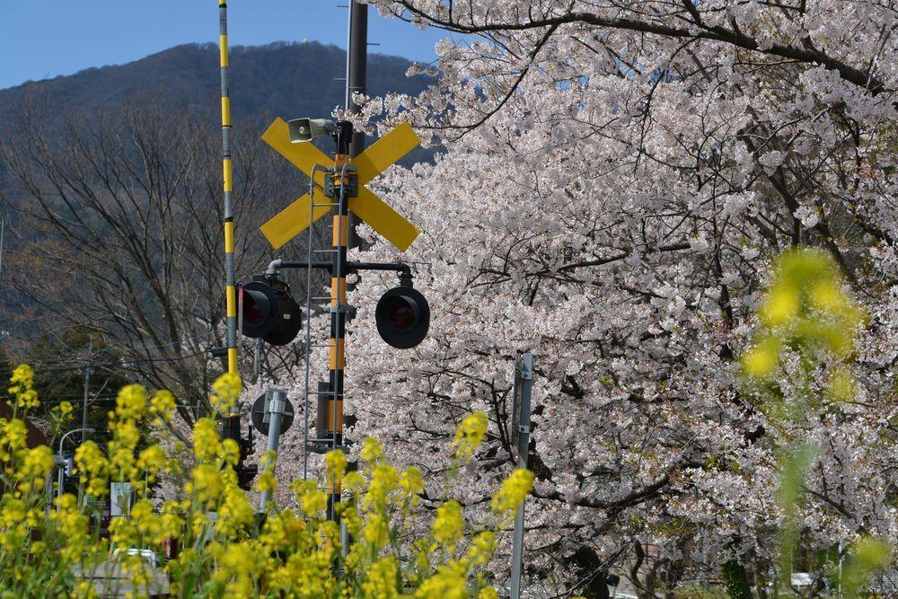 桜と駅と踏切と-6