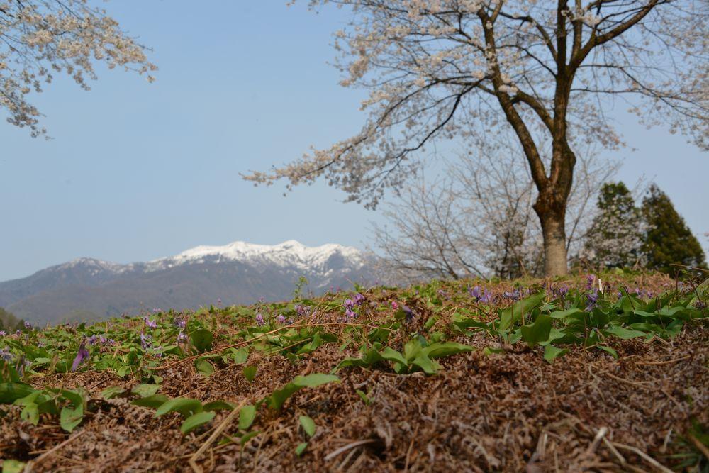 春の棚田-6