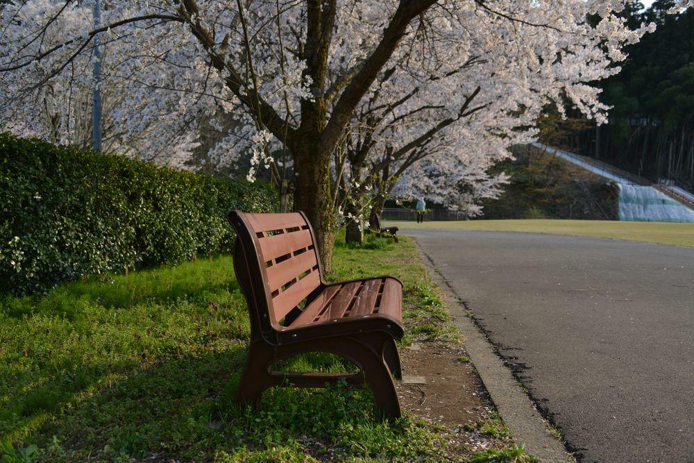 サッカーと桜-6