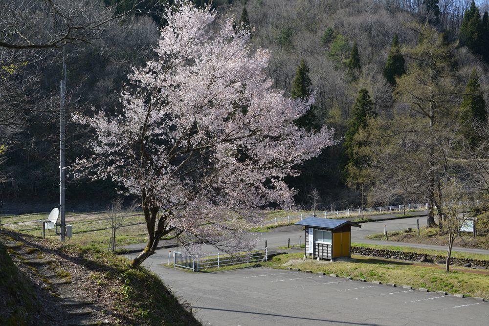 ヒメサユリ森林公園-3