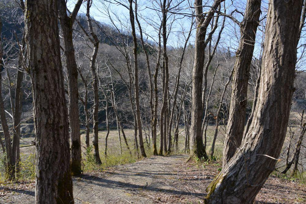 ヒメサユリ森林公園-4
