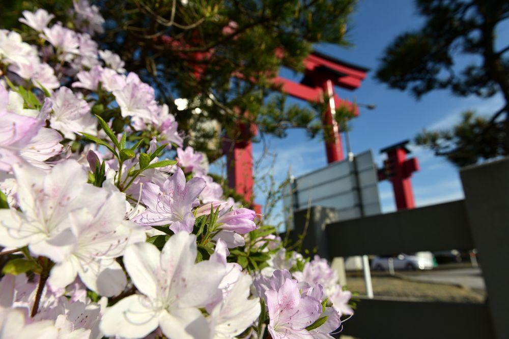 鳥居と花-4