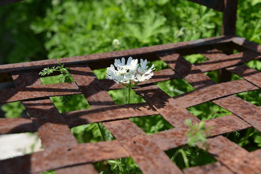さらに花-3