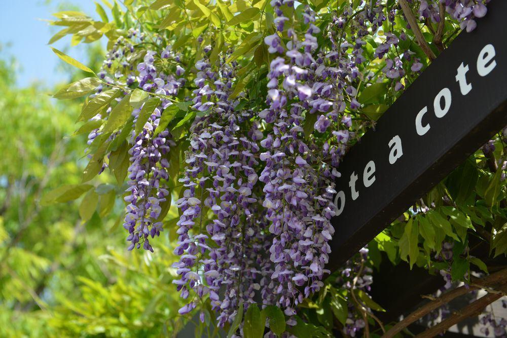さらに花-4