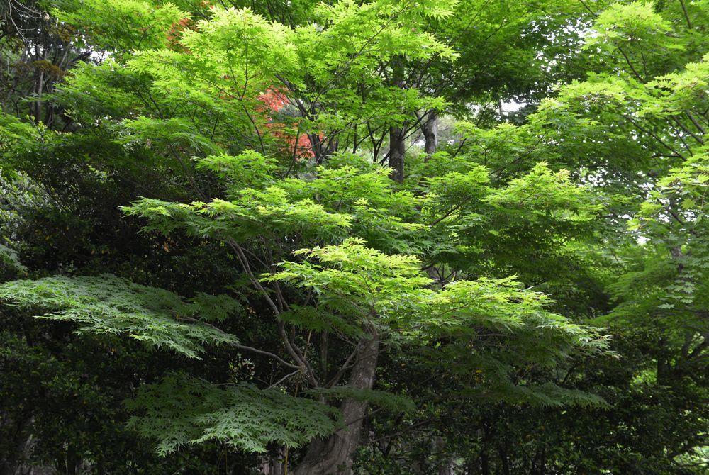 新緑の林-1