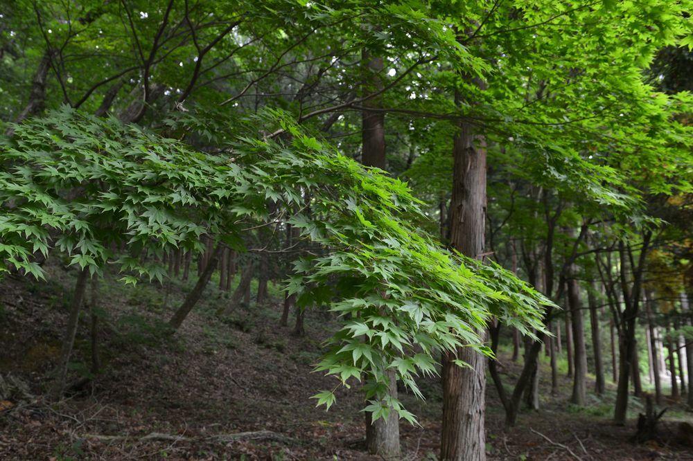 新緑の林-2