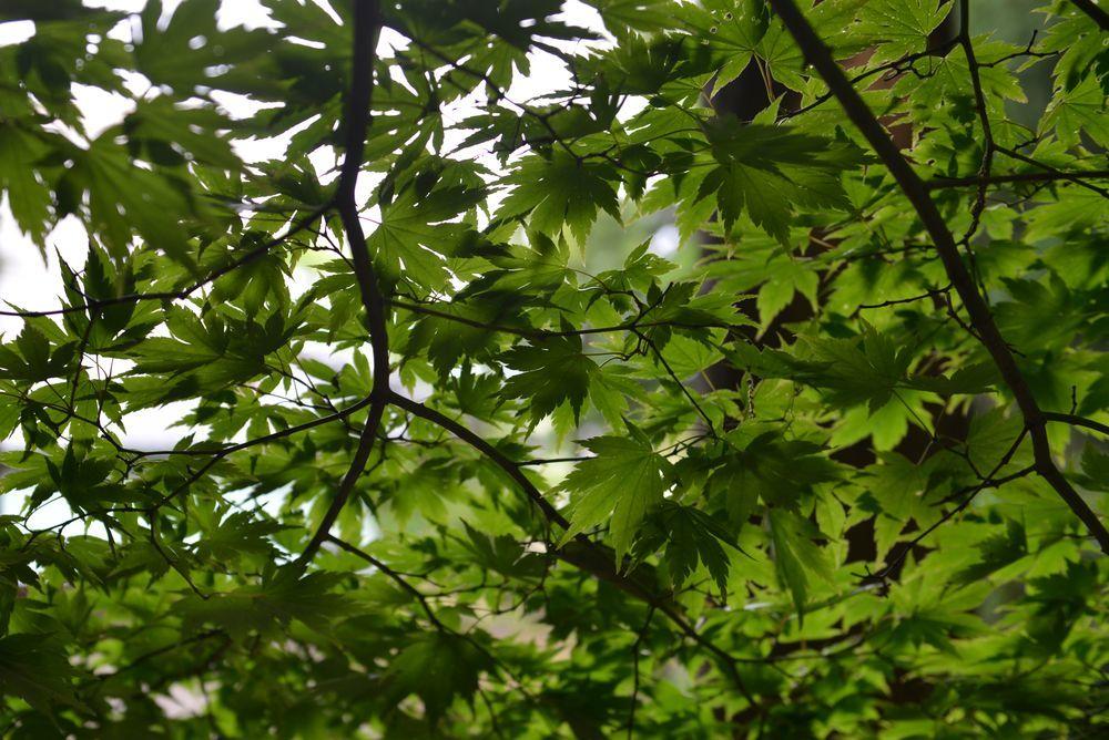 新緑の林-5