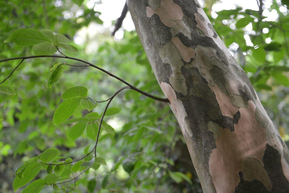 新緑の林-7
