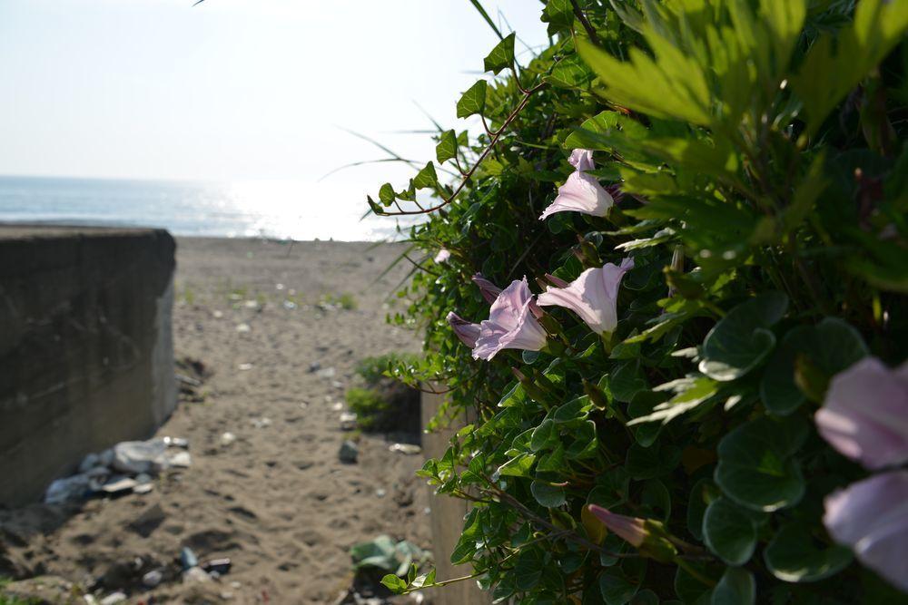海岸へ-2