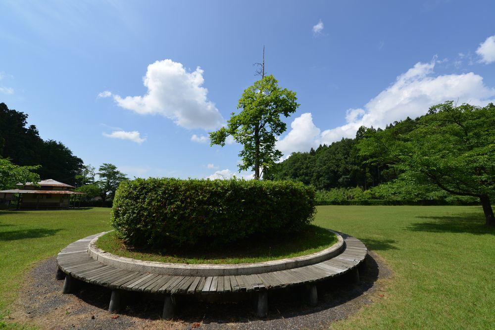 花菖蒲園-8