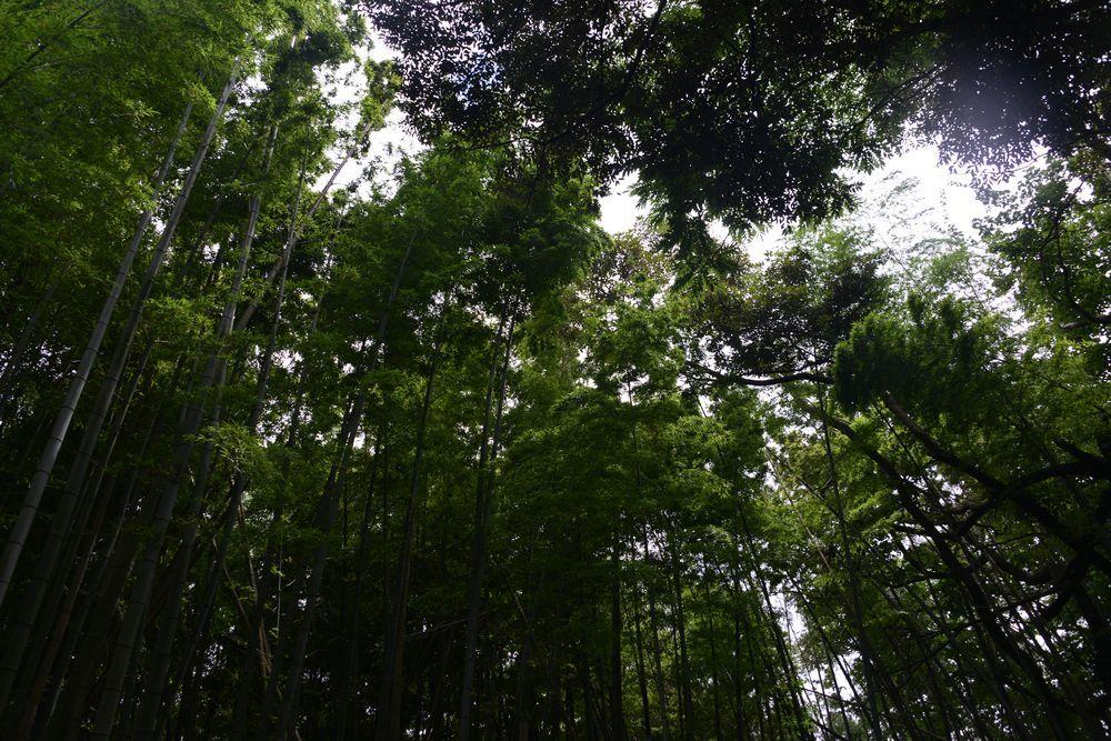 香取神社-6