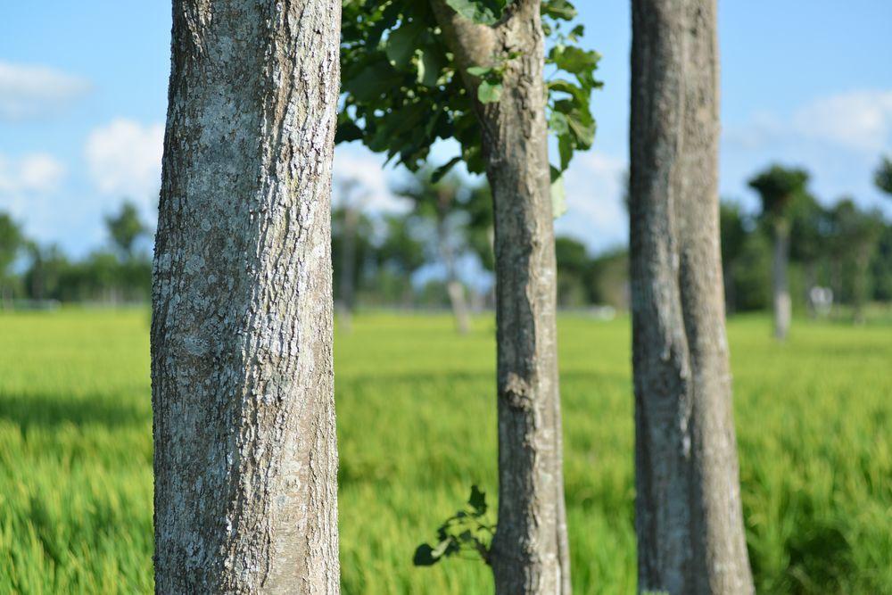 稲架木-3