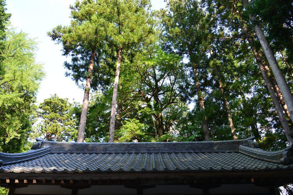 真夏の神社-4