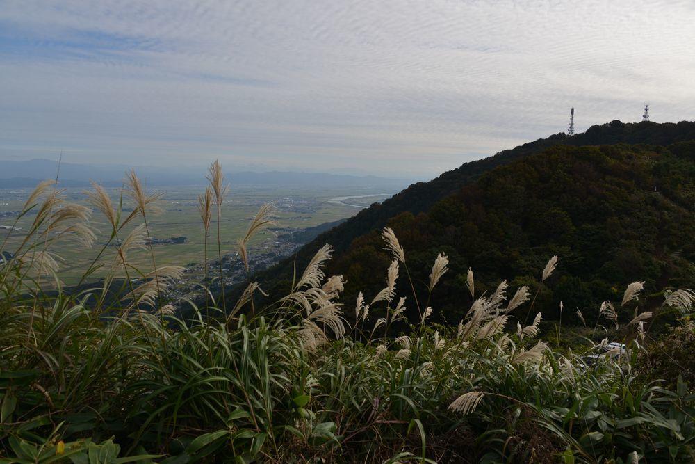 弥彦山とススキー1