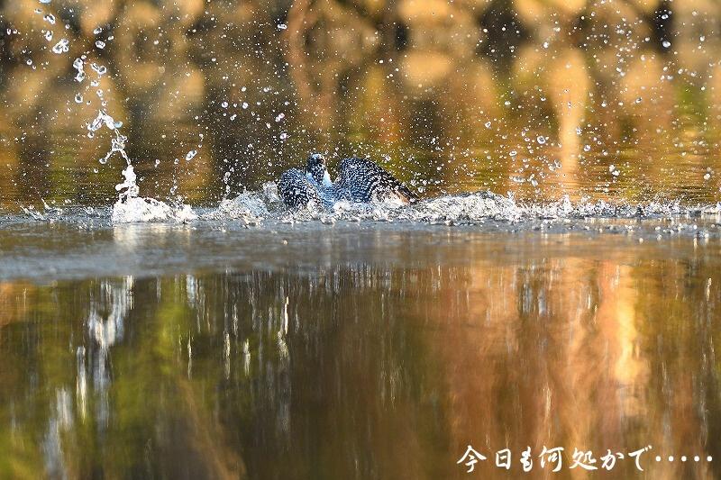 DSC_7784.jpg