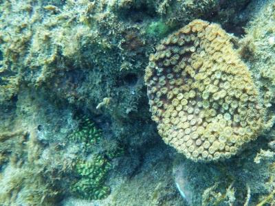 土佐清水 サンゴ