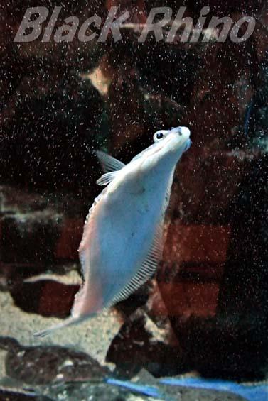 ソウハチ01 越前松島水族館