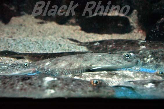 ソウハチ02 越前松島水族館