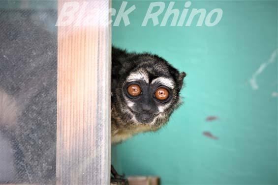 ヨザル01 和歌山城公園動物園
